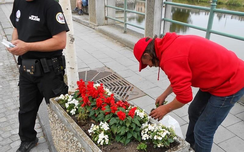 Vandalové vytrhali květiny, pod dohledem strážníků je museli nasázet zpět