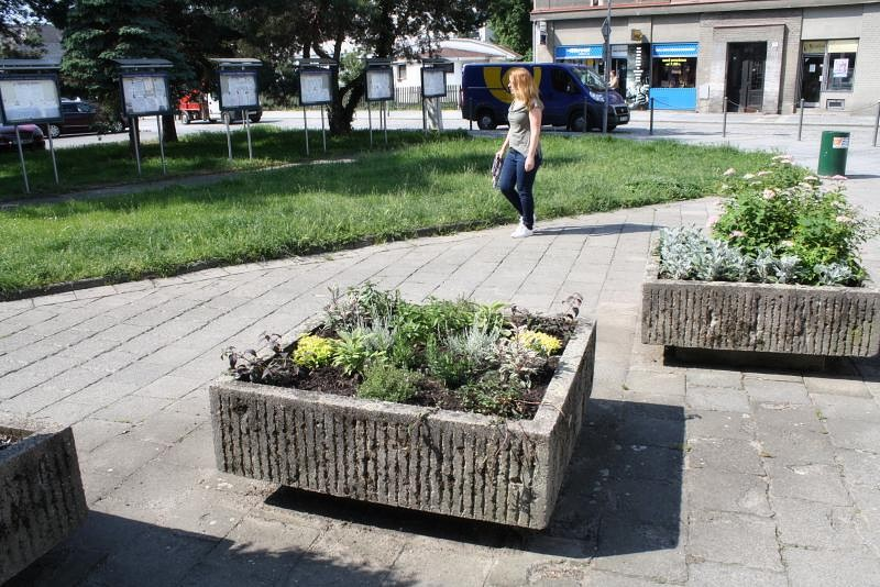 Městem už voní čerstvé bylinky – dobromysl, meduňka či šalvěj