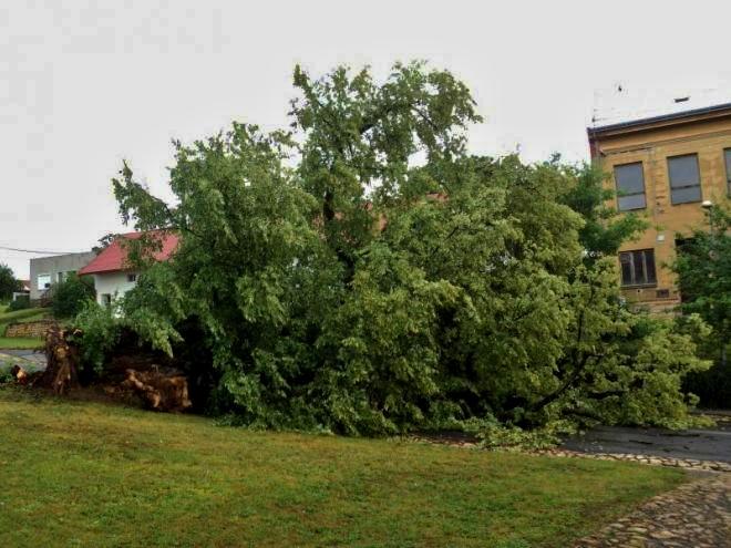 V Tučíně padla 200letá lípa. Památných stromů na Přerovsku tak zbývá jen 10