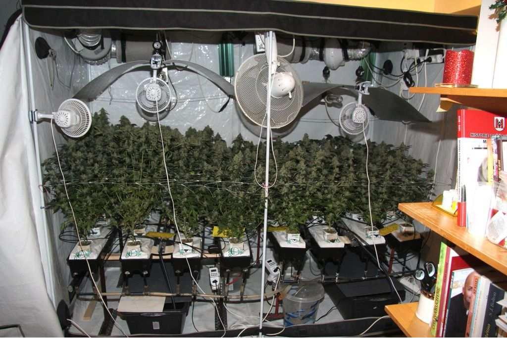 Pěstitele marihuany policisté zastavili na cestě do Rakouska, v jeho bytě našli konopí a 255 lysohlávek