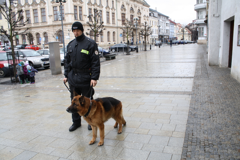 Netradiční výpůjčka – Přerov si půjčil psa Chaka