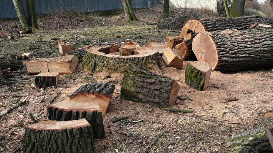 Občané dostanou možnost vyjádřit se ke kácení stromů