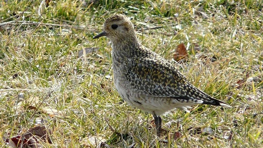 Poslední letošní ornitologická exkurze do Tovačova