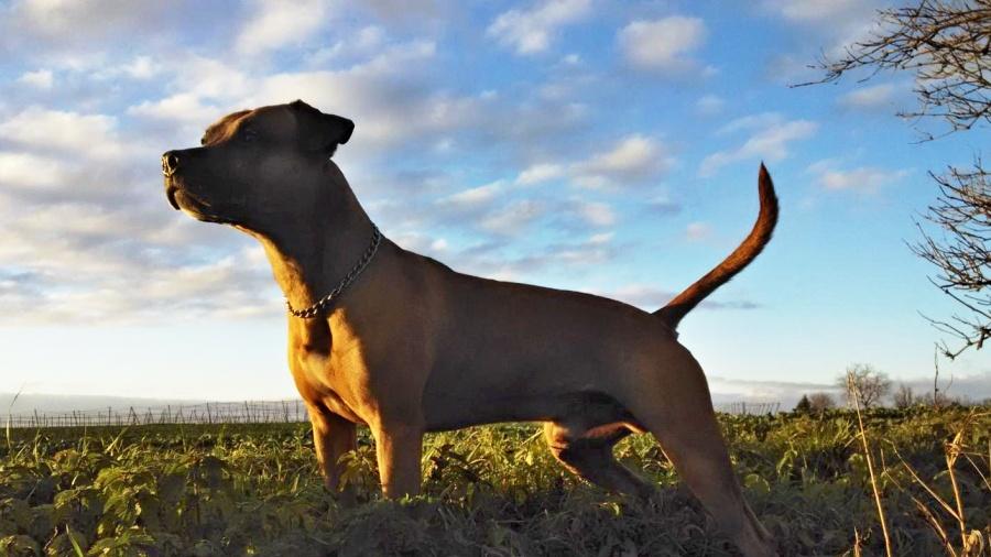 V okrajové části Michalova vznikne psí hřiště. Psi tam mohou trénovat, hrát si i volně běhat