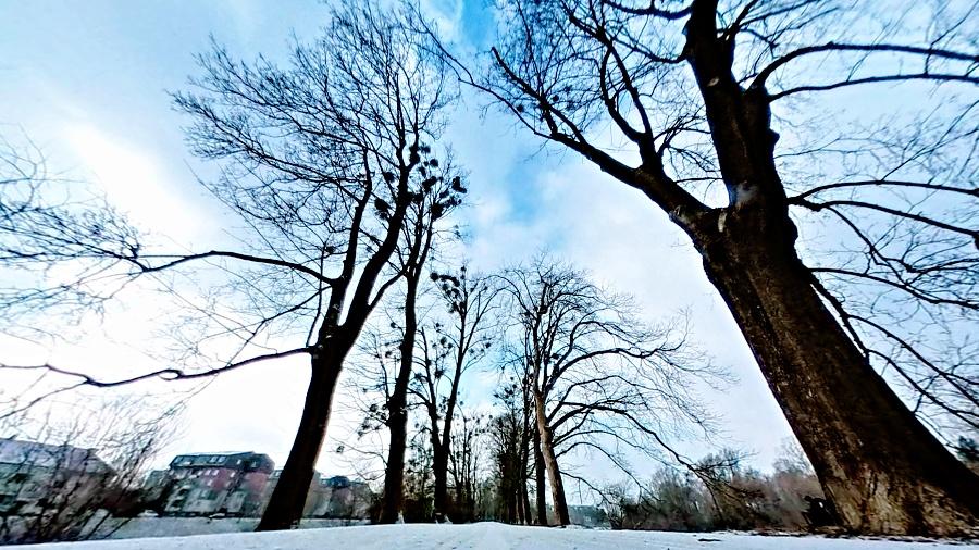 Jmelí na stromech čeká chemický postřik, cyklostezka se na několik dnů uzavře