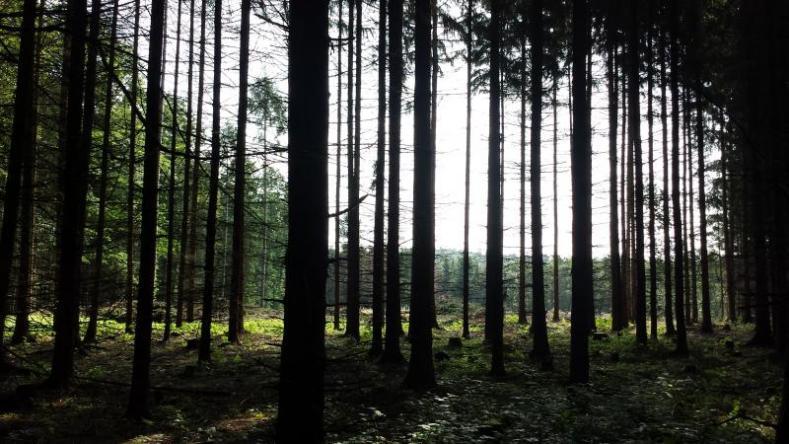 Přerov získá lesní cestu na Svrčově. Výměnou za to přenechá kopec na Veselíčku