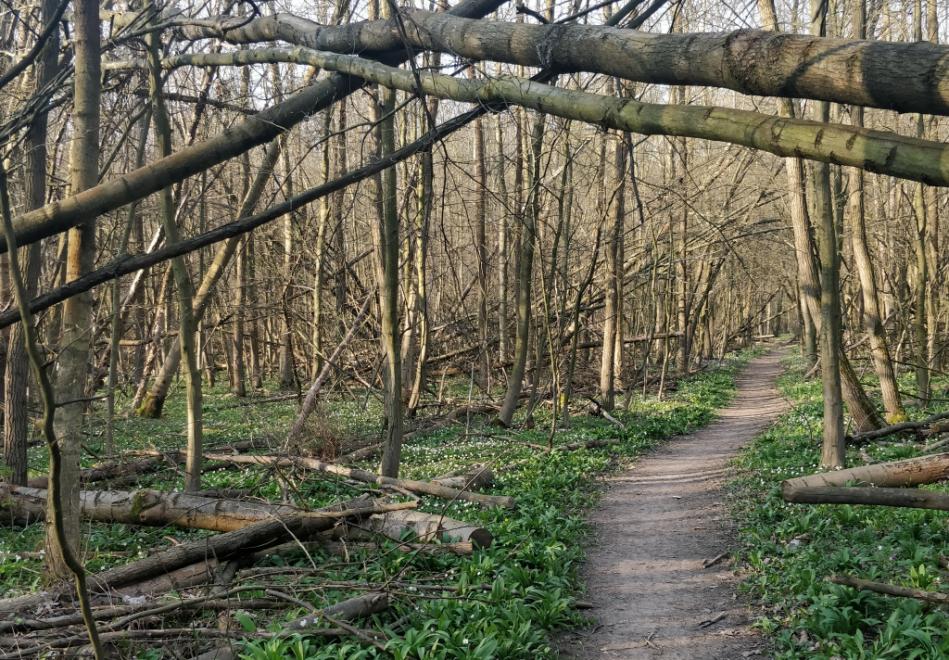 Ze Žebračky mizí popadané stromy, pracuje se i na zavodnění vyschlých míst